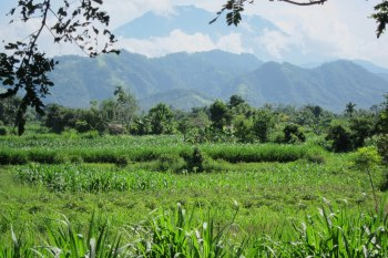 Paddy fields with Mt Agung in the background