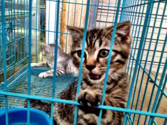 Gorgeous kitties in the market