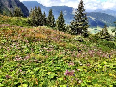 Fields of wild flowers up at 2000m