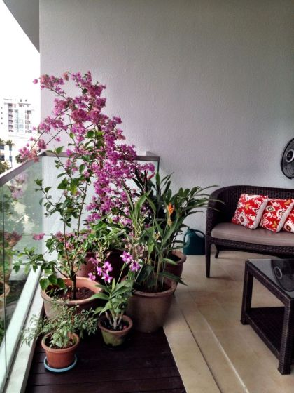 Mirror image - bougainvillea, lantana, hibiscus, heliconium, ginger, orchid and also a little chilli plant