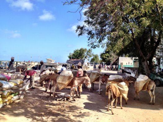 Donkeys are the main form of transport still