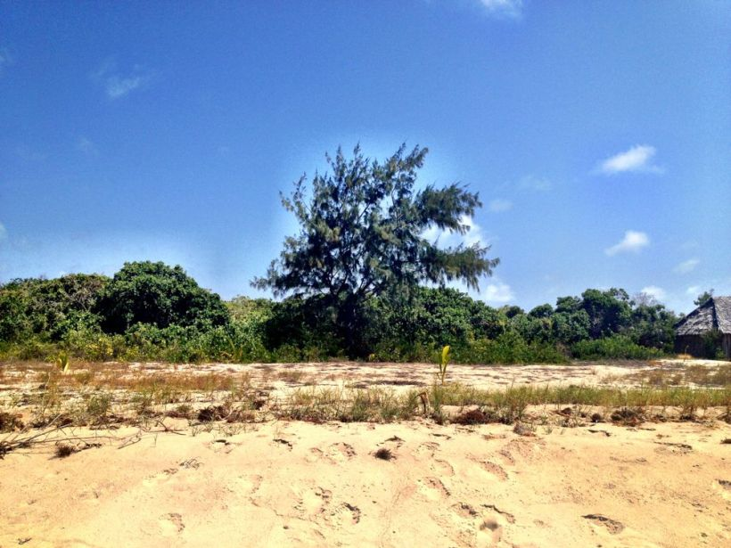 The tree where I buried Mum, on Manda Toto