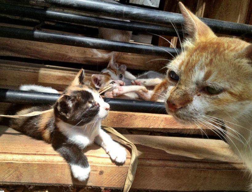 Lamu street cats