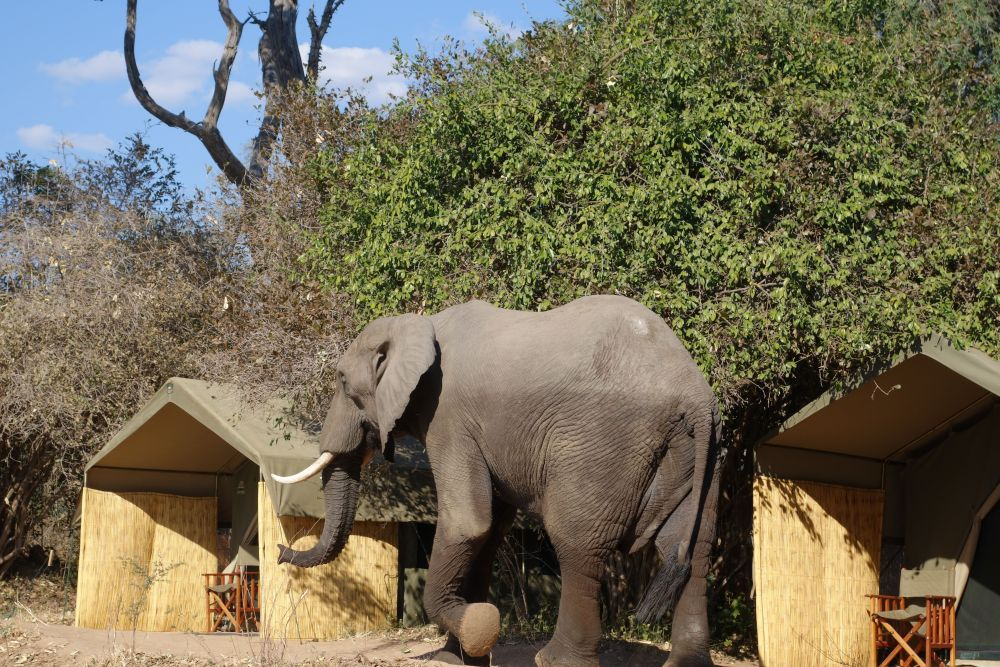 Chilling in Zimbabwe - literally (5/6)