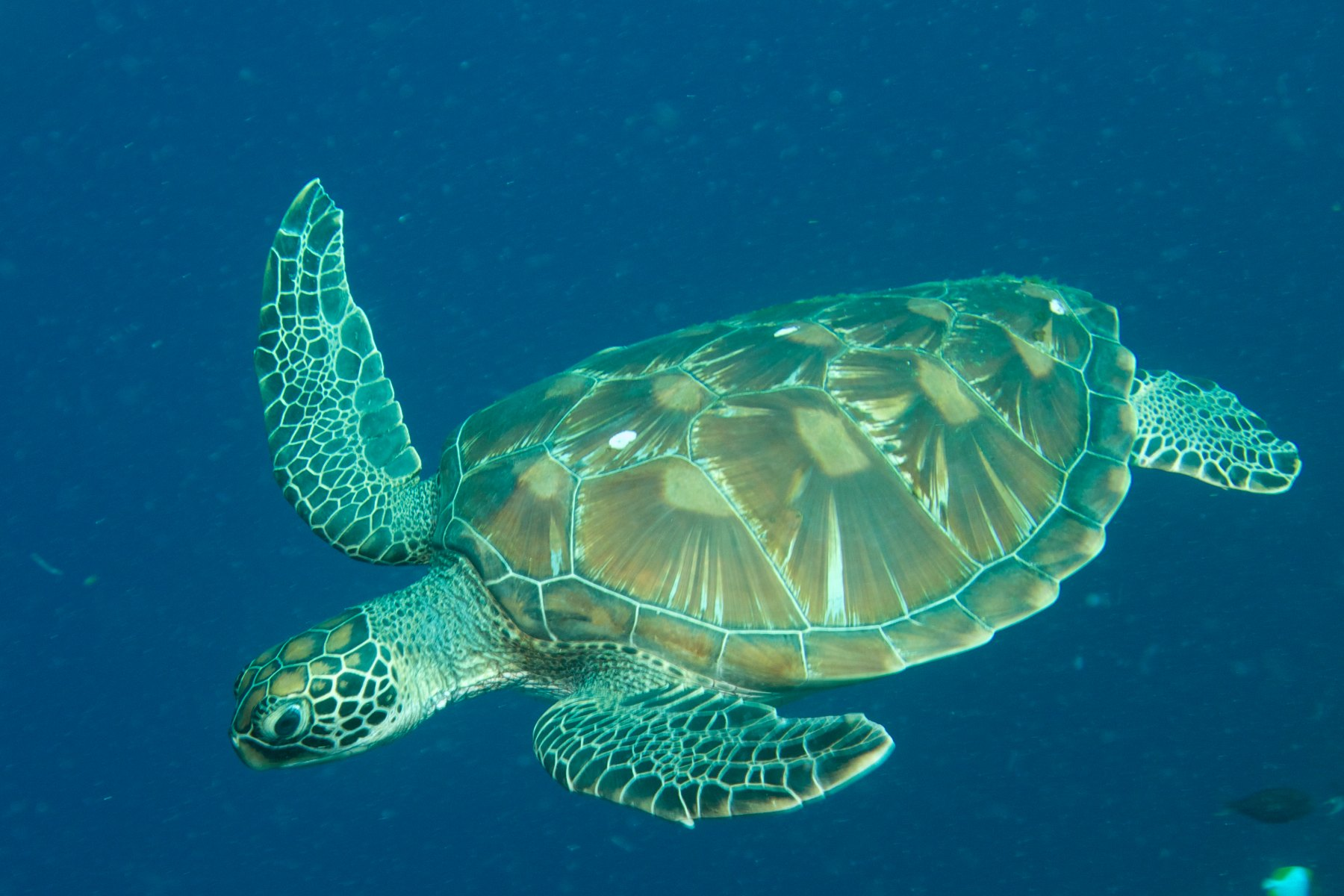 an overview of the ridleys sea turtle