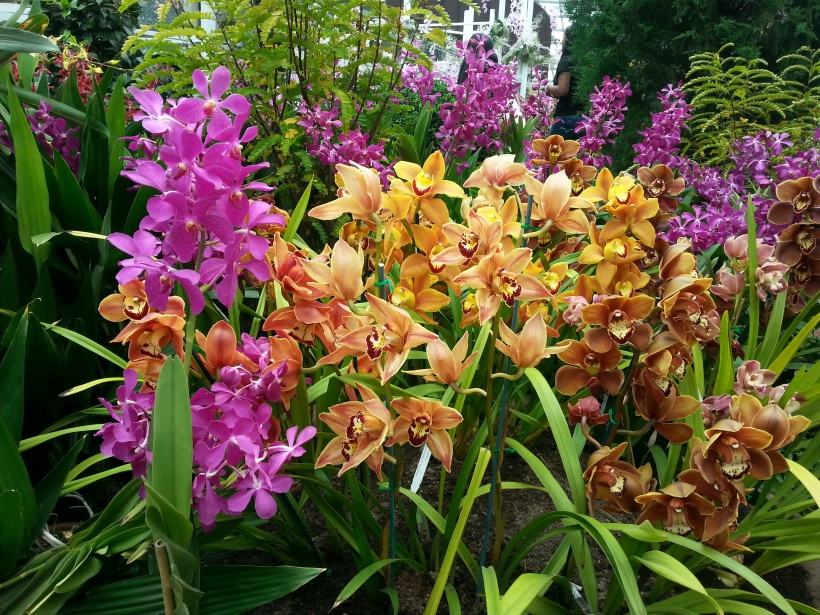 Gorgeous orchids at the Gardens by the Bay