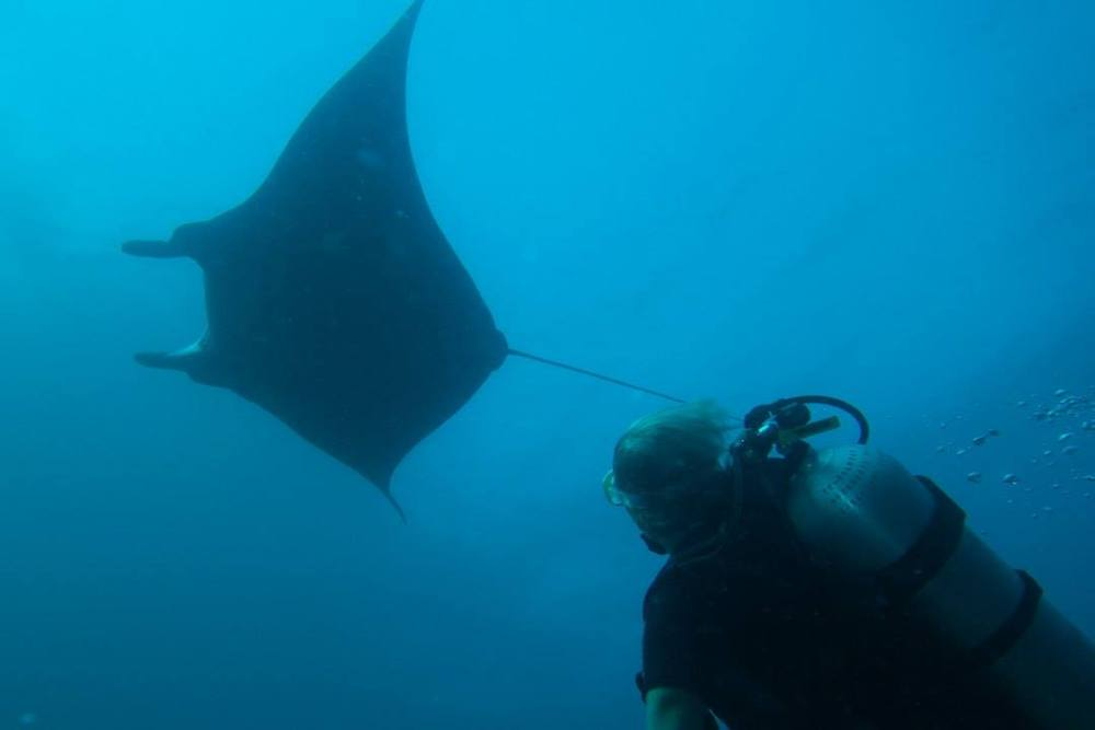 Diving with mantas, sharks, seahorses and birds of paradise in West Papua (1/6)