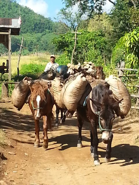 Mules carrying tea or maize down the hill