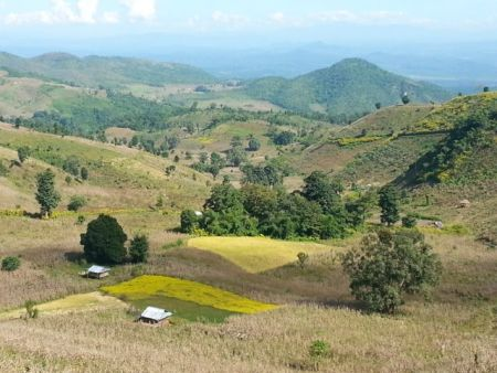 Myanmar: Shan countryside, planted with maize and rice