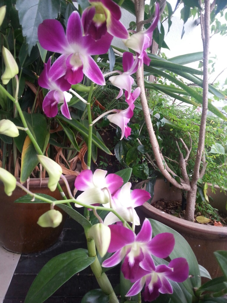 My beautiful orchid