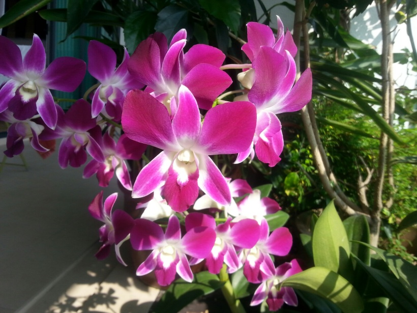 My orchids give me great pelasure
