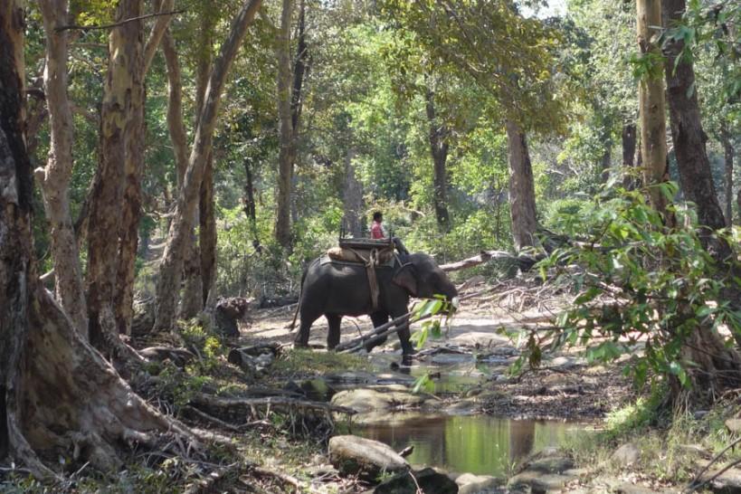 working elephants at CHurna