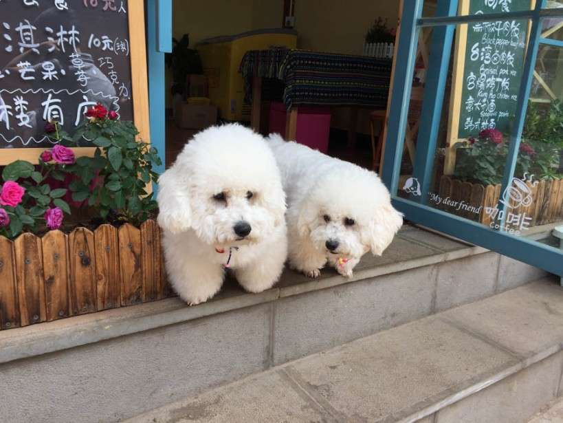 Local dogs - the Chinese do love their dogs