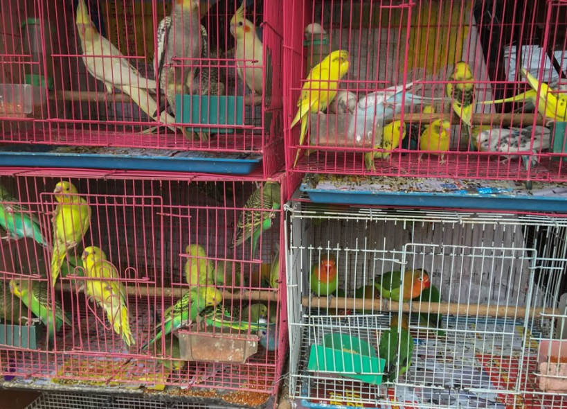 The caged birds sing