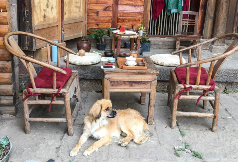 The yunnanese LOVE dogs, they are everywhere. Shaxi, guarding the table