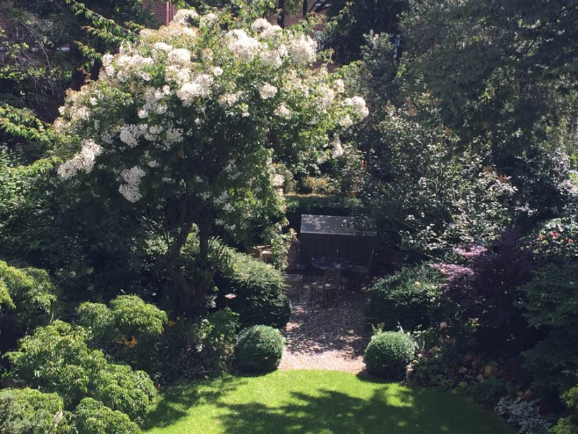 Looking down on the garden at Parkhill - the kiftsgate rose in full bloom