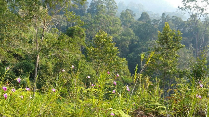 Bamboo orchids frame the mountain scenery