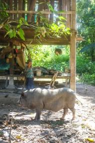 cambodia4star-29