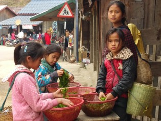Girls sorting river weed