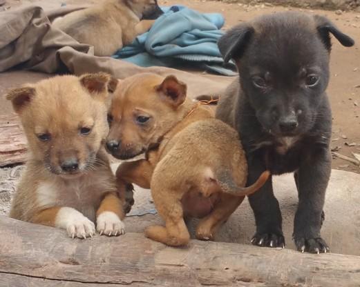 Cute, fat pups - 7 in all