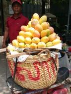 Glorious mangoes