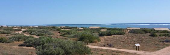 Salsalis in the dunes