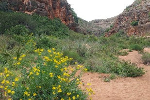 The Pilgamunna gorge