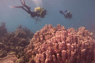 Nice hard corals