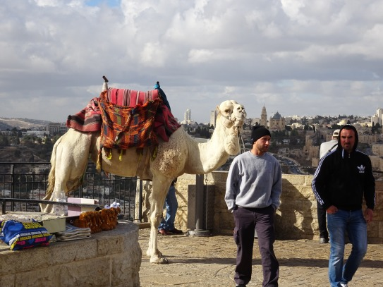 Camel rides - but watch your purse