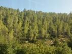 Larches line the hillsides