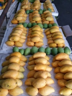 Gorgeous Alphonse mangoes