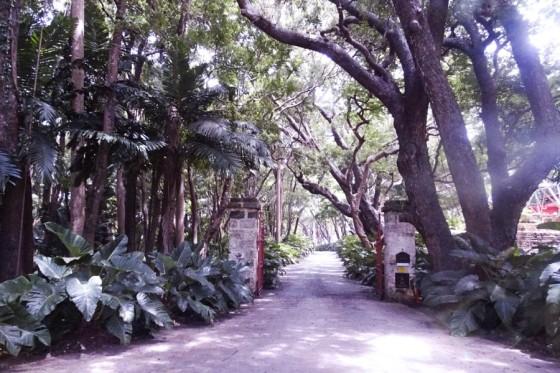 The avenue to Codrington College