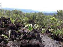 The lava path