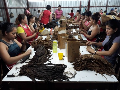 Sorting the grades of tobacco