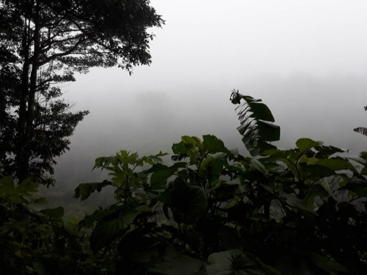 Dawn in the cloud forest