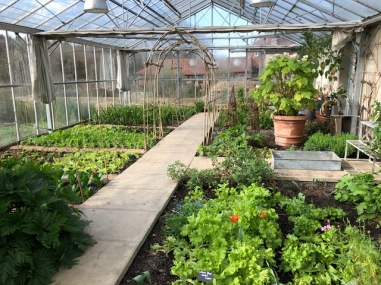 The 'indoor' over wintering garden