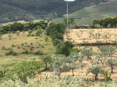 The Mota's farm is organic - see the scorched earth caused by use of pesticides (right)