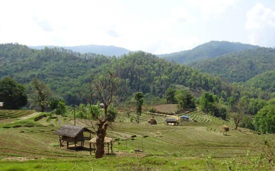 Typical farming landscape