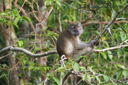 The river is teeming with macaques