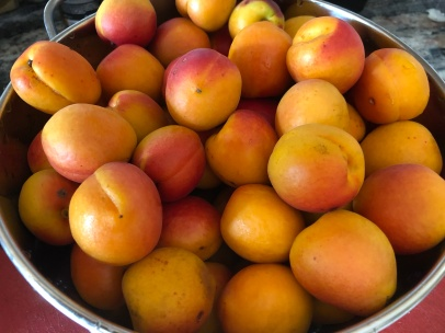 Valais apricots, best in Europe