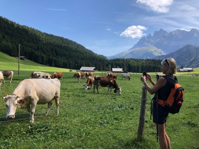 Fi likes the cows too