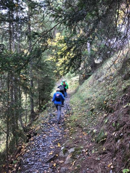 Walking through the woods