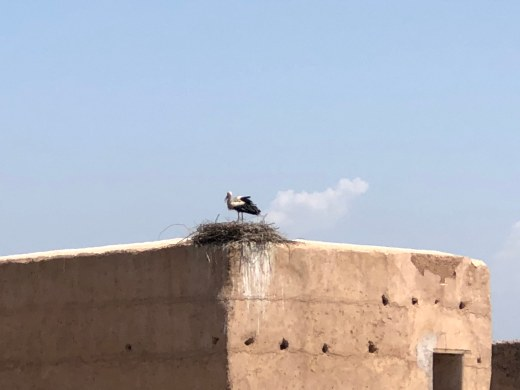 Nesting storks, lots of chicks...