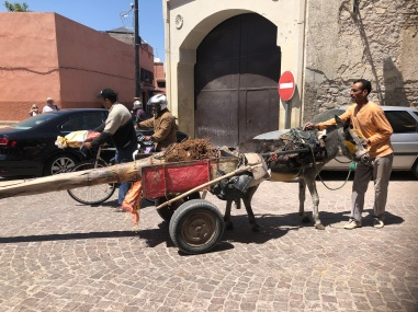 Transporting a couple of pamls into the MEdina by donkey & mule!