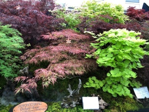 Amazing acer displays