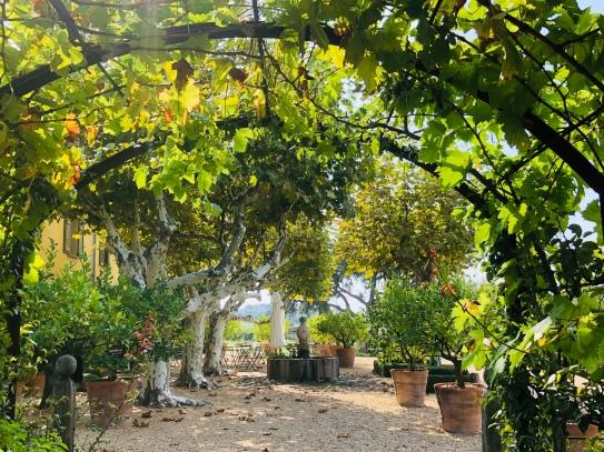 Grape arbour at Malherbes
