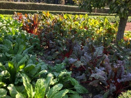 More lettuces than flowers in teh Botanical gardens