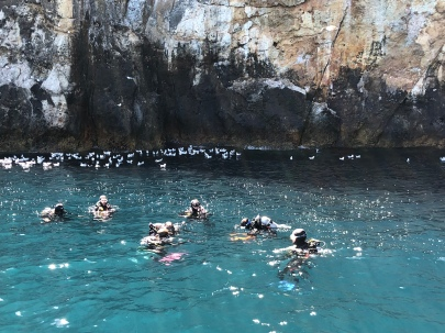 The snorkelers