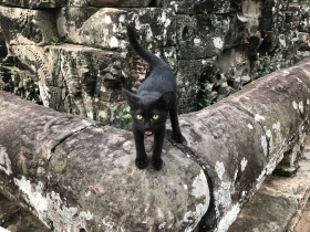 Found this little fellow at Bayon