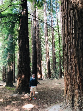 The sequoia or redwood forest